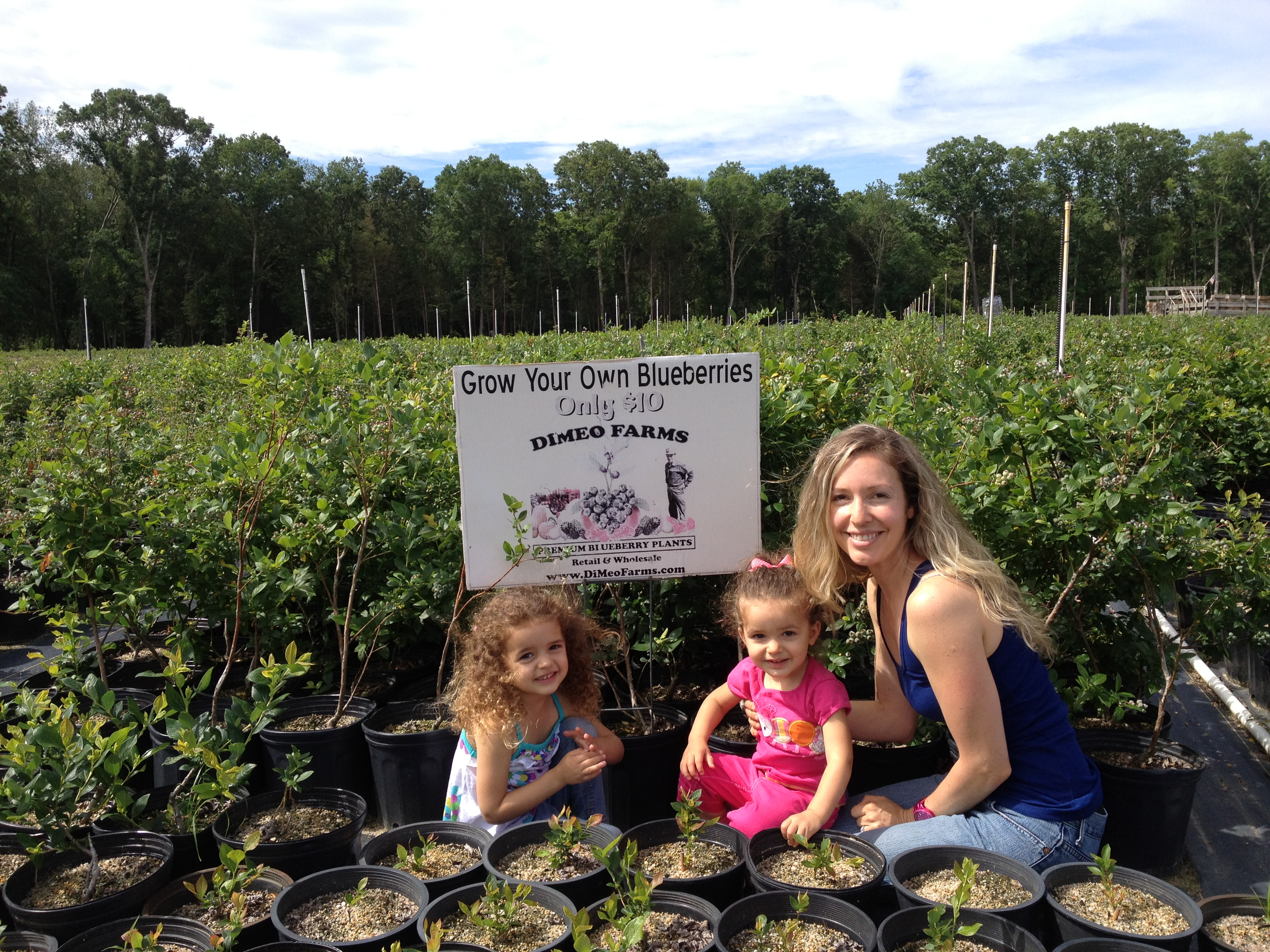 How to plant blueberry bush - Blueberry Plants For Sale