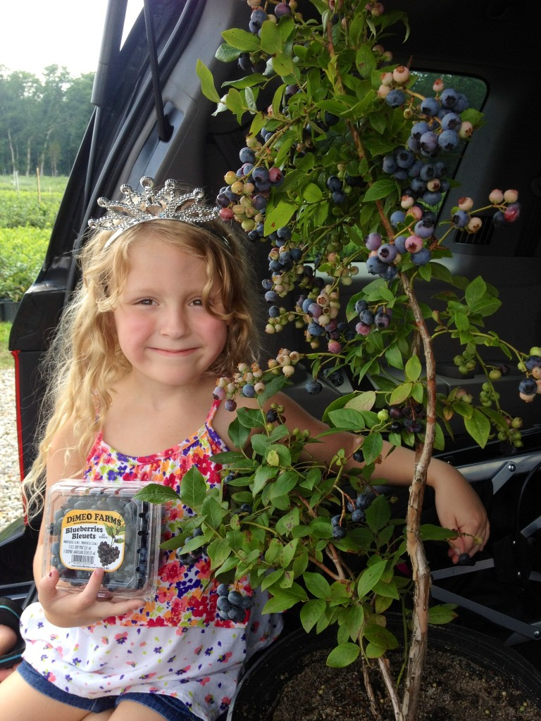Fight Cancer With Eating Blueberries from DiMeo Blueberry Bushes