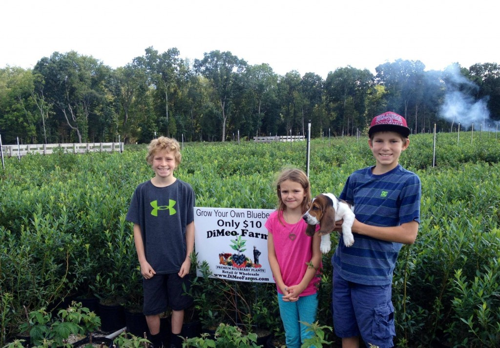 Organic Blueberry Bushes for Sale