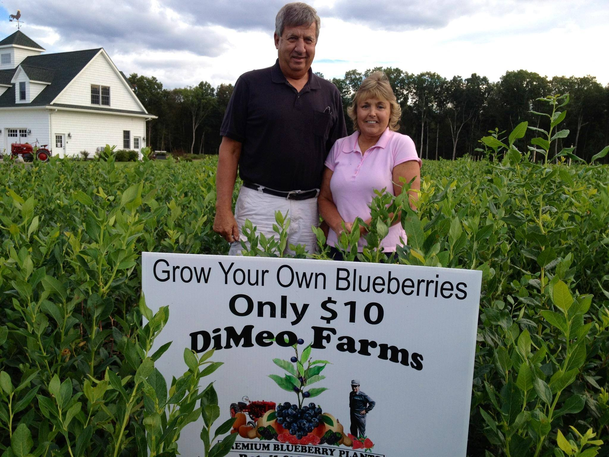 How to plant blueberry bush - Kids Love Blueberries