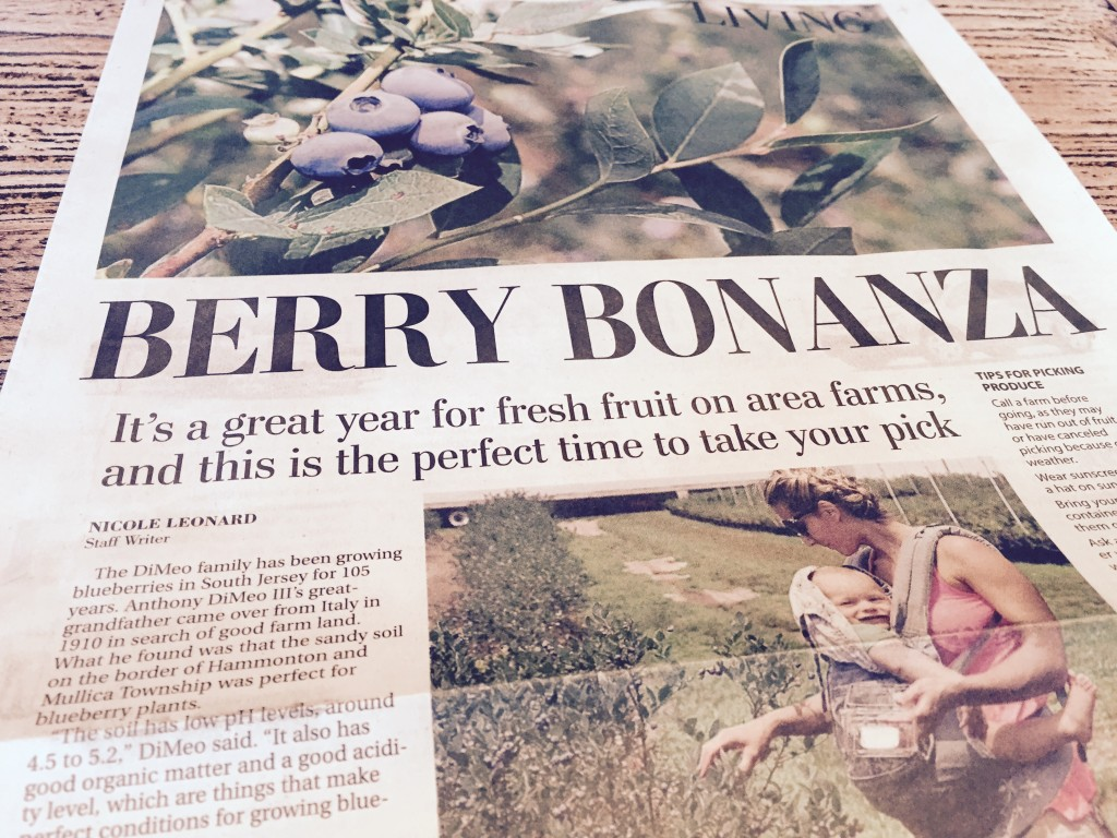 People love picking blueberries at DiMeo's Blueberry Farms in Hammonton